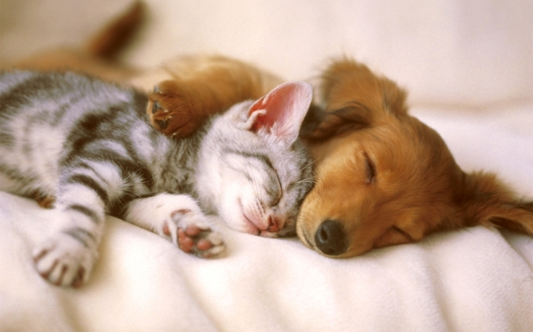 dog-and-cat-sleeping-copy